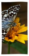 Checkered Skipper Square Beach Towel