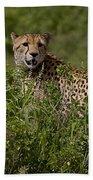 Cheetah   #0090 Beach Towel