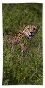 Cheetah   #0095 Beach Towel