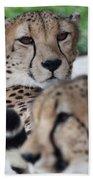 Cheetah Awakening Beach Towel