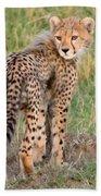 Cheetah Cub Looking Your Way Beach Towel