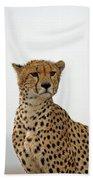 Cheetah In Serengeti. Beach Towel