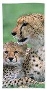 Cheetah Mother And Cub Beach Towel