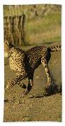 Cheetah On The Run Beach Towel