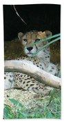 Cheetah Resting  Beach Towel