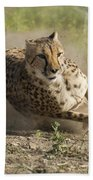 Cheetah Run 2 Beach Towel