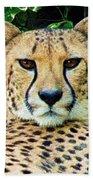 Cheetah Stare L Beach Towel