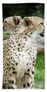 Cheetah's 04 Beach Towel