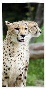 Cheetah's 05 Beach Towel