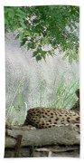 Cheetahs-120 Beach Towel