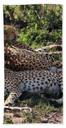 Cheetahs Of The Masai Mara Beach Towel