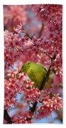 Cherry Blossom Time Beach Sheet
