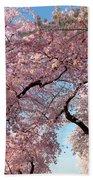 Cherry Blossoms 2013 - 025 Beach Towel