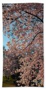 Cherry Blossoms 2013 - 038 Beach Towel