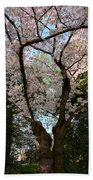 Cherry Blossoms 2013 - 056 Beach Towel