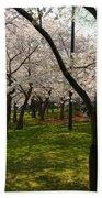 Cherry Blossoms 2013 - 057 Beach Towel