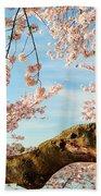 Cherry Blossoms 2013 - 089 Beach Towel