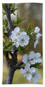 Cherry Blossoms In White Beach Towel