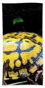 Chesapeake Box Turtle Beach Towel