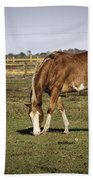 Chestnut In The Pasture Beach Towel