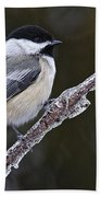 Chickadee Pictures 228 Beach Towel