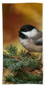 Chickadee Pictures 375 Beach Towel
