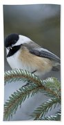 Chickadee Pictures 521 Beach Towel