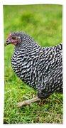 Chicken Walking On Green Pasture Beach Towel