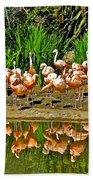 Chilean Flamingo Reflection In San Diego Zoo Safari Park In Escondido-california Beach Towel
