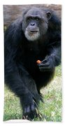 Chimpanzee-5 Beach Towel
