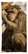 Chimpanzee    Beach Towel