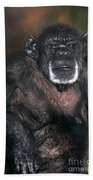 Chimpanzee Portrait Endangered Species Wildlife Rescue Beach Towel