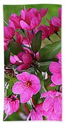 Chinese Apple Blossoms Beach Towel