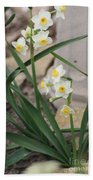 Chinese Sacred Lily Beach Towel