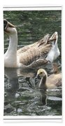 Chinese Swan Goose And Gosling Beach Towel