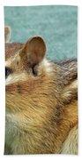 Chipmunk Portrait Beach Towel