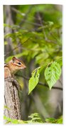 Chipmunk Shares Fence Post Beach Towel