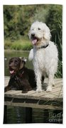 Chocolate And Cream Labradoodles Beach Sheet