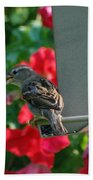 Chow Time At The Bird Feeder Beach Towel