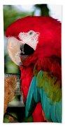 Chowtime Beach Towel by Karen Wiles