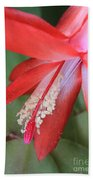Christmas Cactus 3 Beach Towel