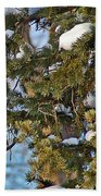 Christmas Cardinal Beach Towel