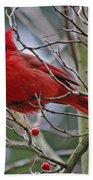 Christmas Cardinal Beach Towel