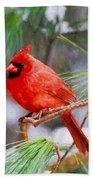 Christmas Cardinal - Male Beach Towel