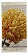 Chrysanthemum Grandiflorum Yellow Beach Towel