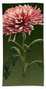 Chrysanthemum Shelbers Beach Towel