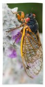 Cicada Beach Towel
