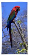 Cincy Parrot Beach Towel