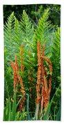 Cinnamon Fern Beach Towel