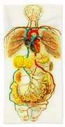 Circulatory System Beach Towel